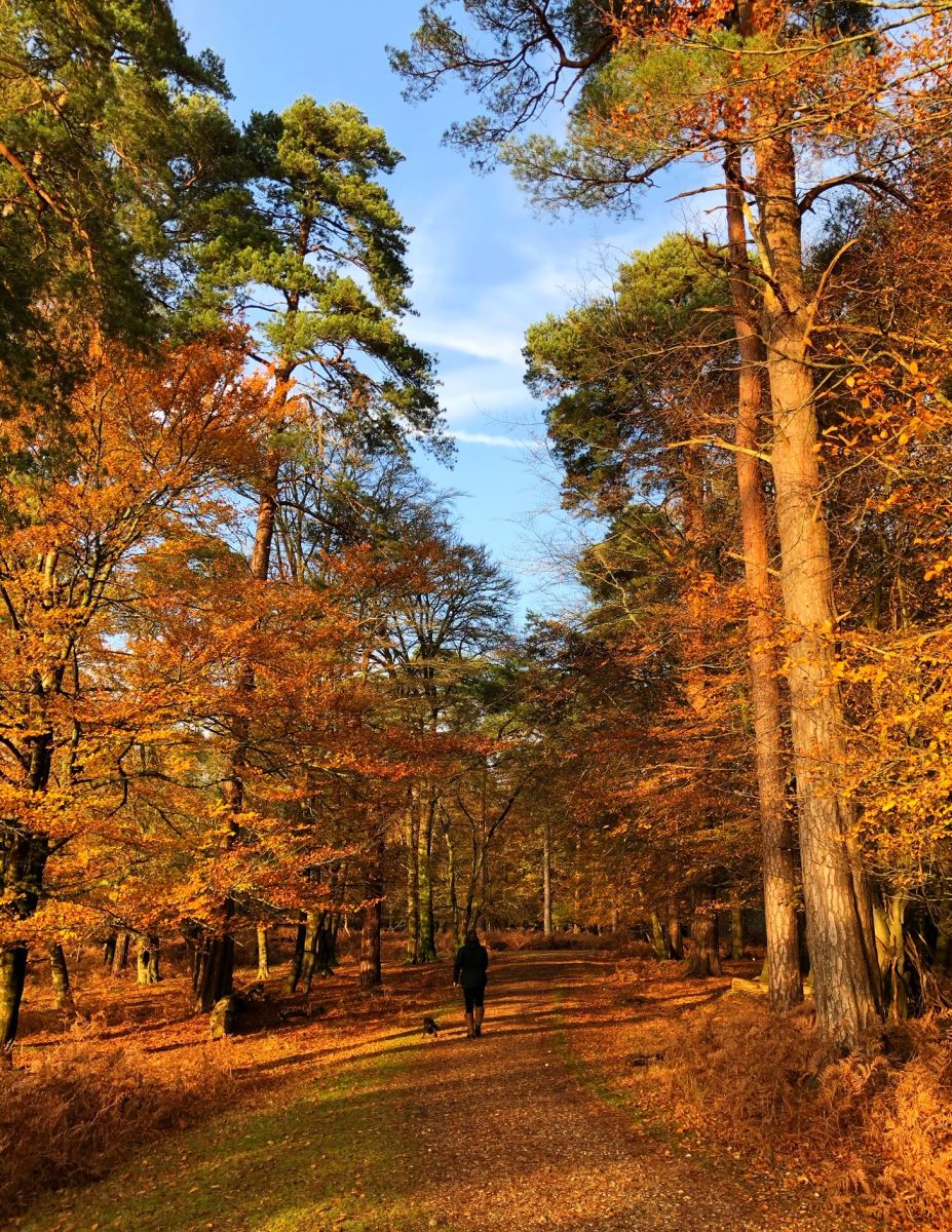dog walking at knightwood oak in the autumn in the new forest