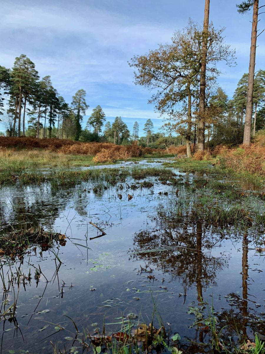 bratley water in the autumn in the new forest