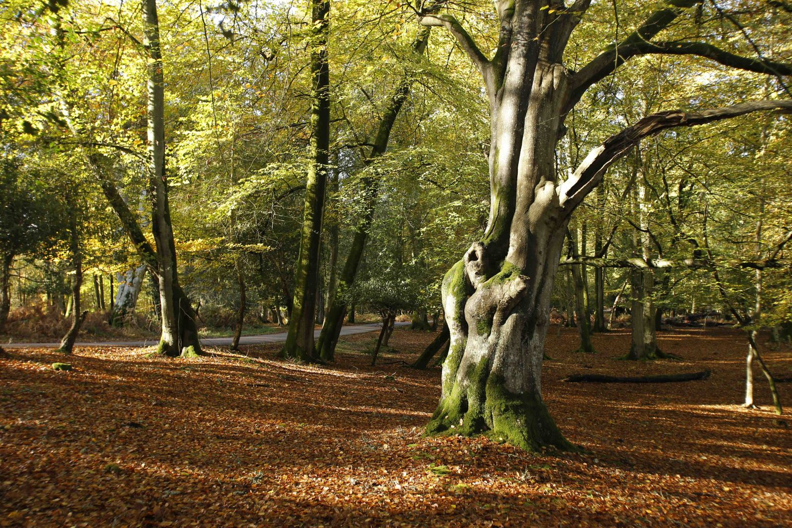 autumnal woodland in the new forest