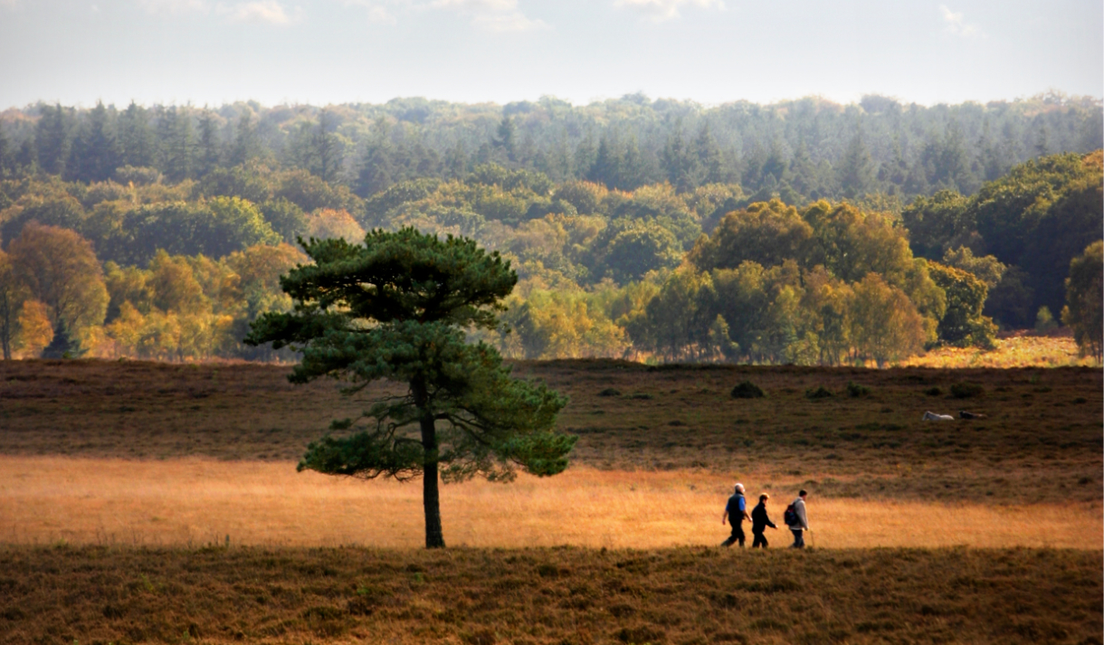 walking in the new forest