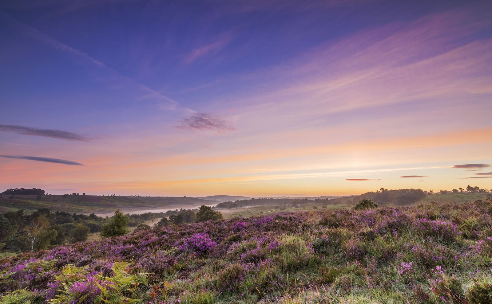 summer landscape of the new forest