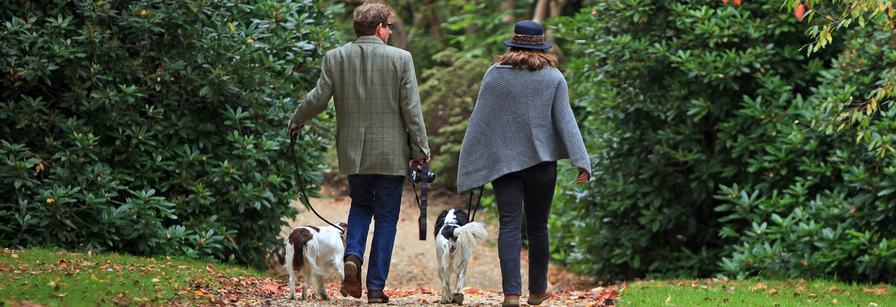 Dog Friendly Things to Do - Visit The New Forest