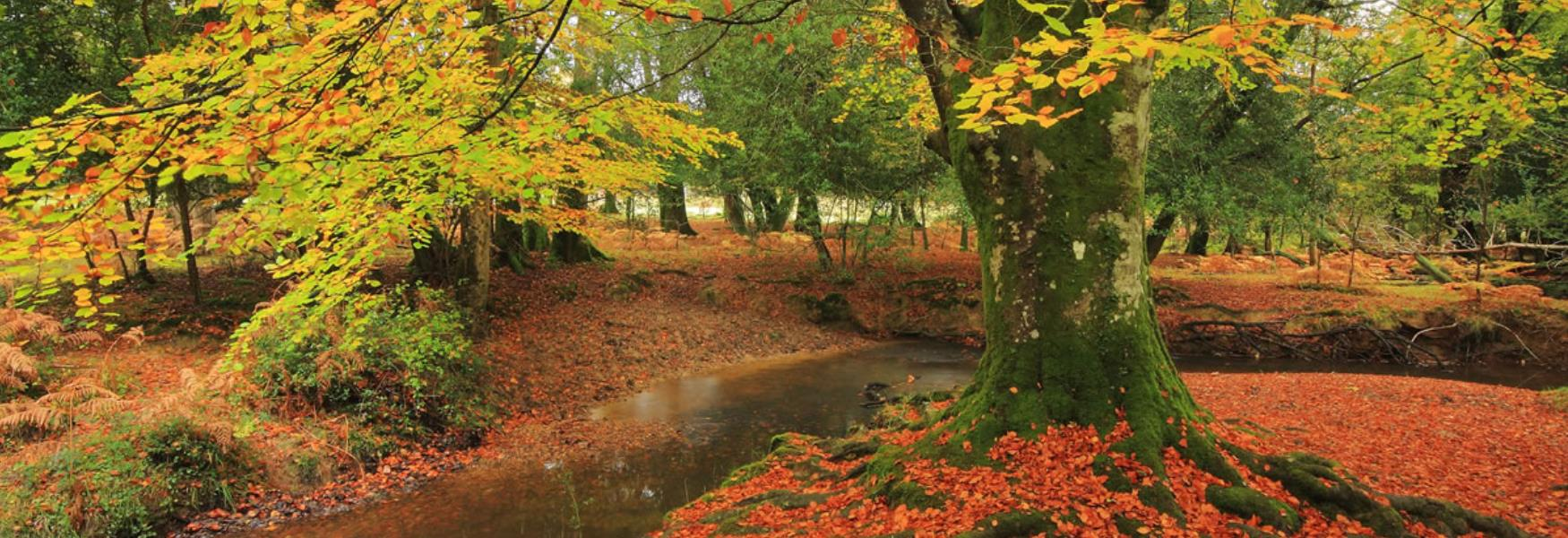 autumn leave and trees in the new forest