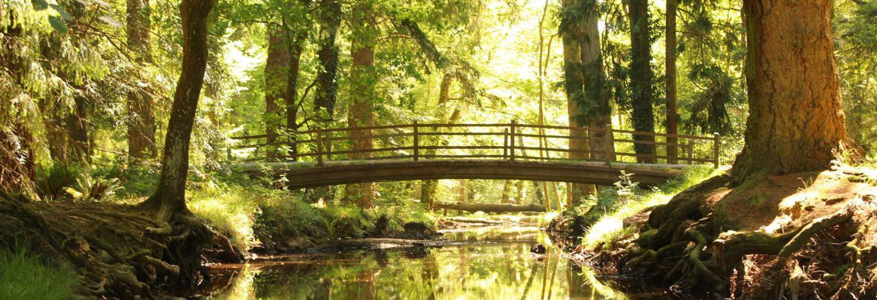 Bridge at Ornamental Drive with bright green trees in the New Forest