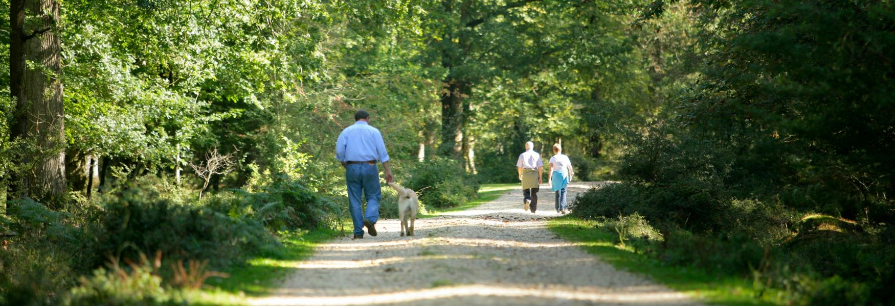 Couple and man & dog walking down gravel footpath in the sun in the New Forest