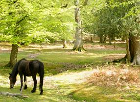 pony on wildlife walk in the new forest