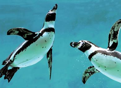 penguins at marwell zoo