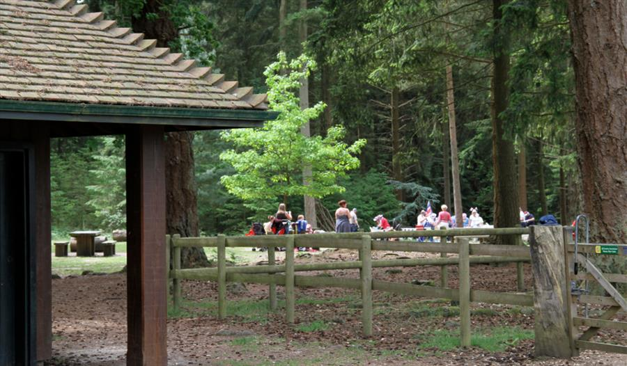 People gathering at Bolderwood in the New Forest