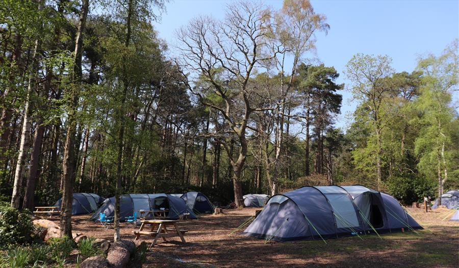 Campsite at Avon Tyrrell in the New Forest
