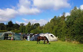 The Camping Field with Pony