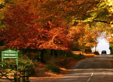 Top 10 Things To Do in the New Forest in Autumn