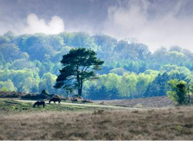 New Forest scores in the 2017 TripAdvisor Awards