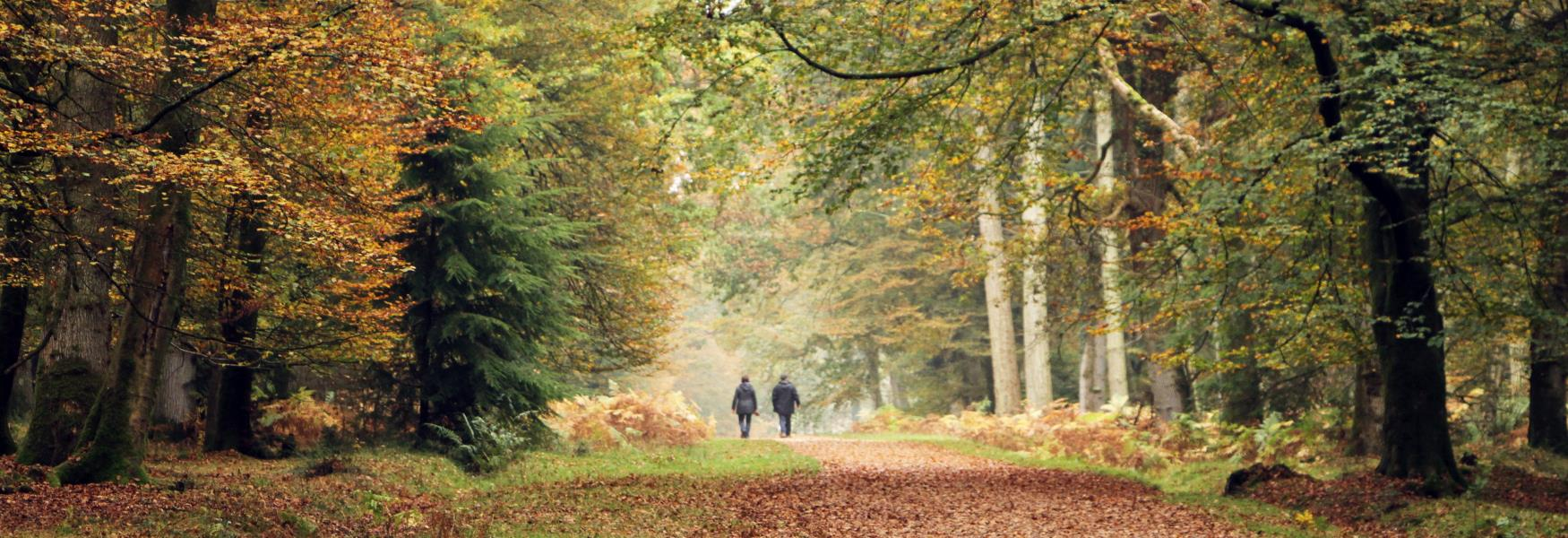 Walking through the fallen leaves in autumn in the new forest