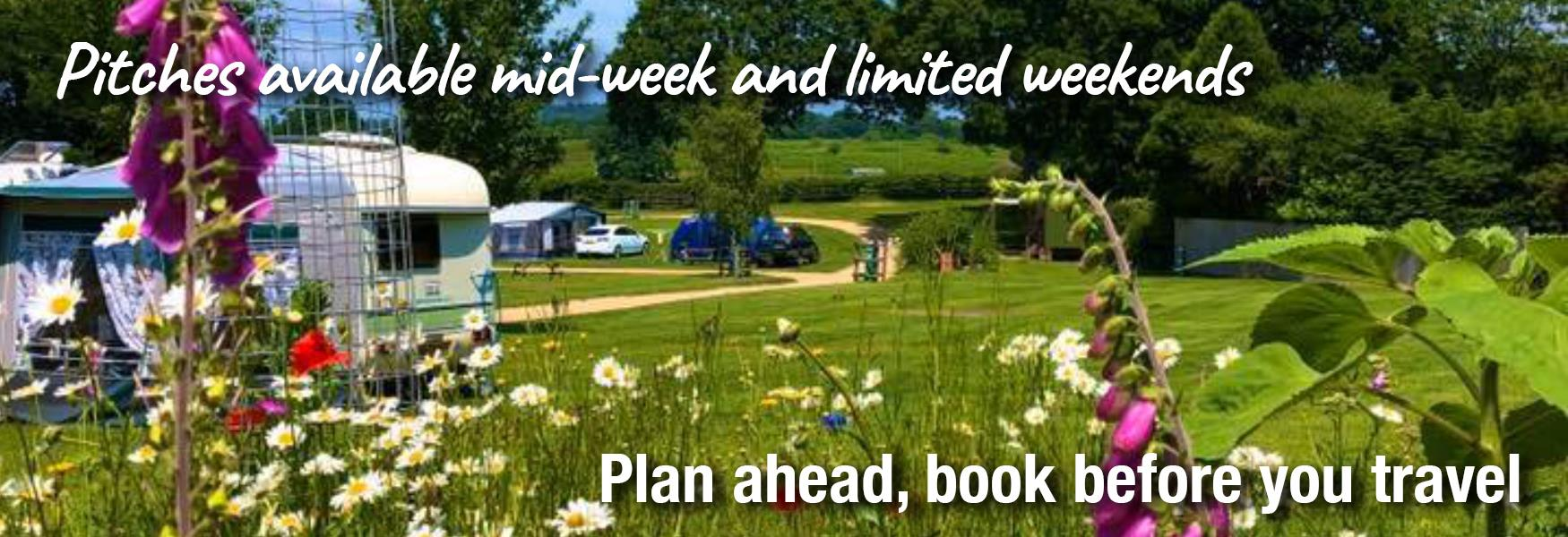Camping in the New Forest with text about booking before you travel and availability