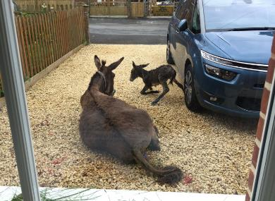 The New Forest comes to life... on a local residents driveway!