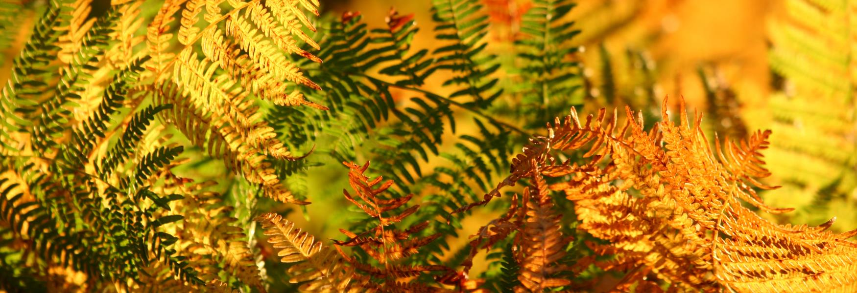 autumn orange ferns fauna in the new forest