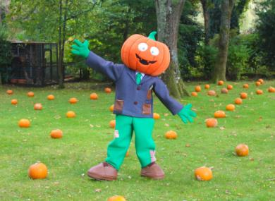 10 awesome things you can do this October Half Term in the New Forest