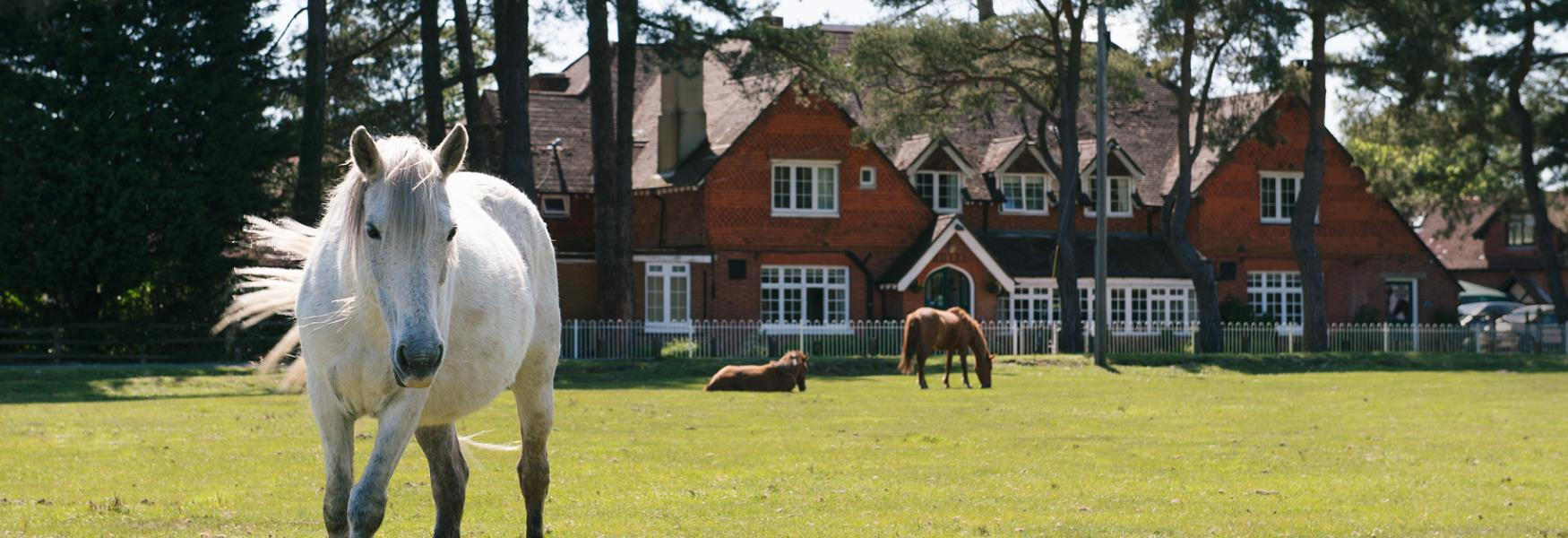 beaulieu hotel walking accommodation in the new forest