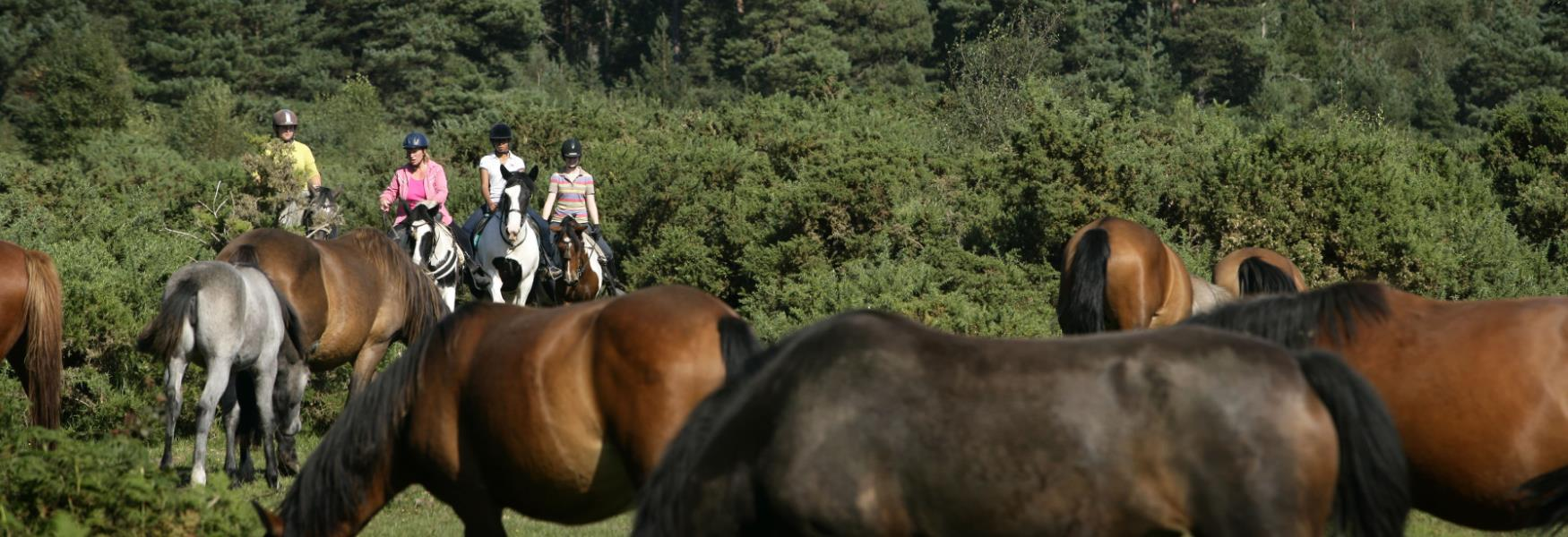 Horse Riding Activity through the forest in the new forest