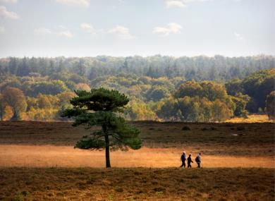 Top 10 Pub Walks in the New Forest