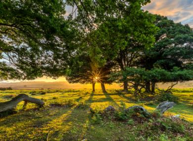 Forest power – why being in the New Forest is so good for your health