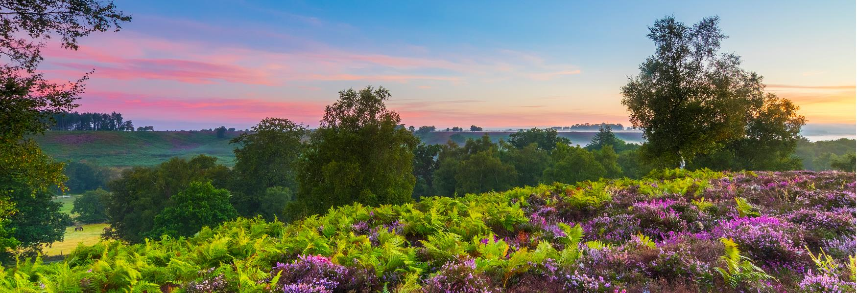 Summer landscape sunrise in the new forest