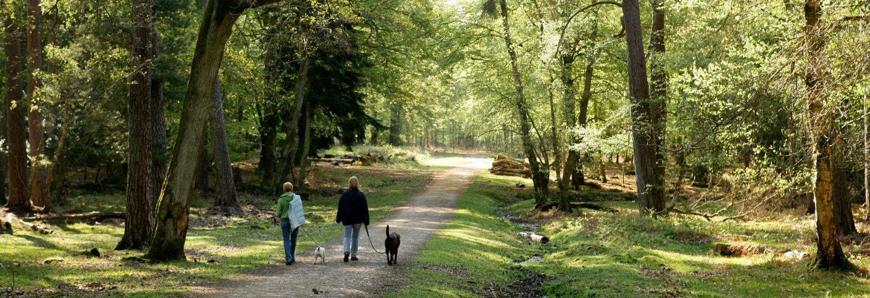 walking in dogs on a path in the new forest