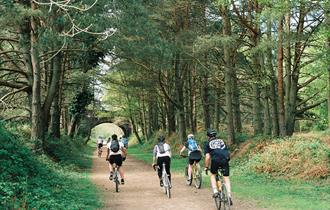 Forest Leisure Cycling