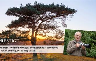 New Forest Based Wildlife Photography Workshop