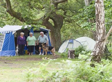 tents at matley wood caravan & camping site in the new forest