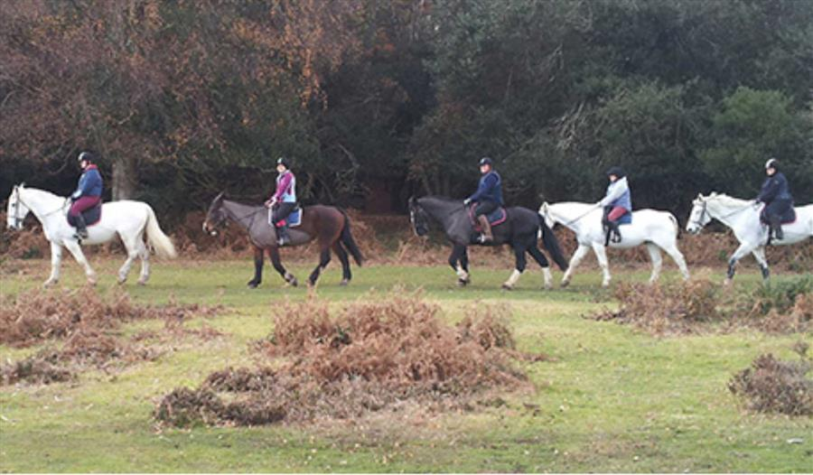 Brockenhurst Riding Stables