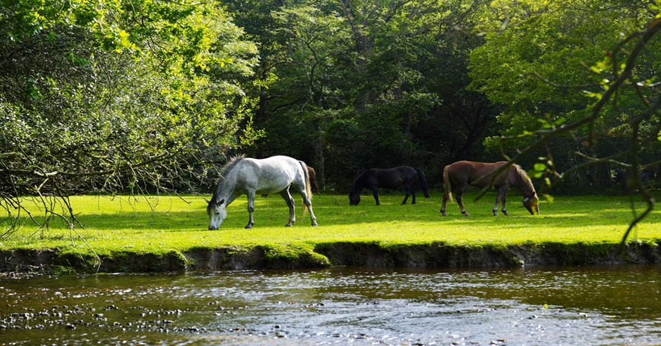 Dog Friendly Pubs In The New Forest With Accommodation