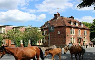 ponies outside the bell inn in the new forest