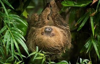 sloth at marwell zoo
