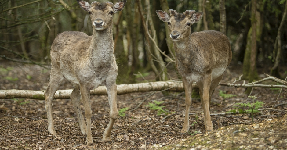 Dog Friendly Attractions New Forest