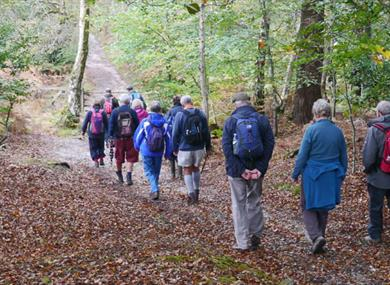 Fuzzacker Guided Walks