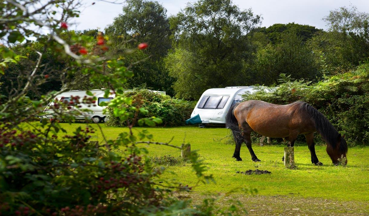 pony at campsite at ocknell caravan & camping site in the new forest