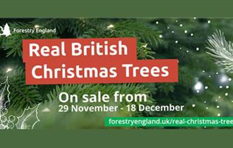 Real Christmas Tree Sales at New Park